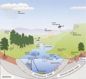 Image result for ecological homeostasis